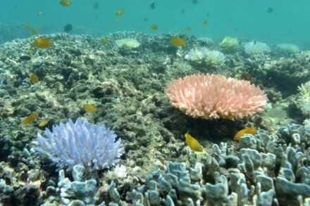 Grande barrière de corail. (Photo : Justin Marshall / coralwatch.org