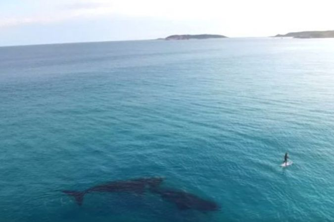 rencontre paddle board baleines