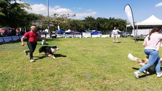 concours canin