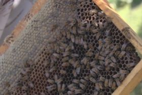 insecticide abeilles