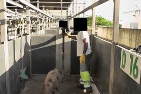Abattoir Martinique