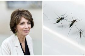 Virus Zika Marisol Touraine