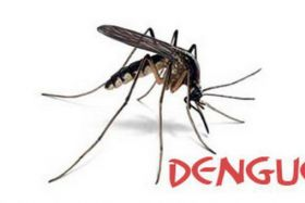 Moustique dengue