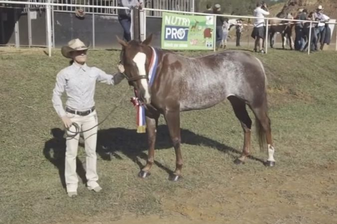 cheval concours